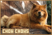 Dogs: Chow Chow