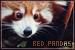 Pandas: Red