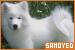 Dogs: Samoyed