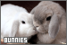 Rabbits & Bunnies:
